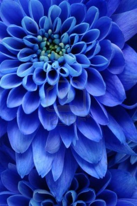 Colour Theory And Theorists Goethe Psychology Of Blue Flower