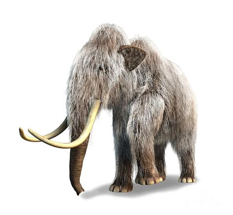 mammoth images woolly mammoth white background digital by leonello