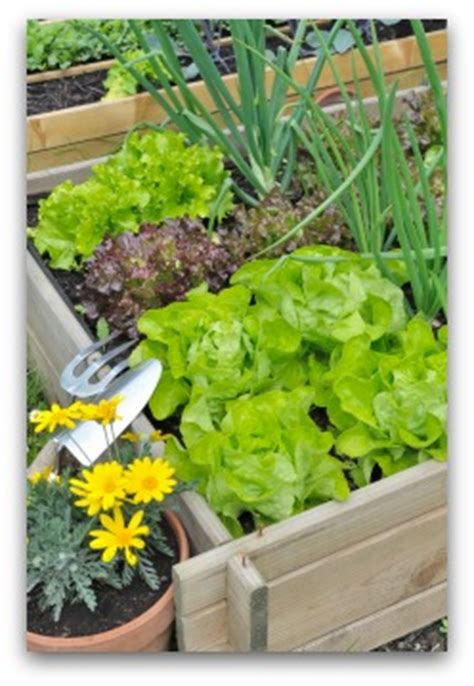 small veg garden ideas small vegetable garden plans and ideas