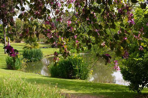 Fullerton Botanical Gardens Fullerton Arboretum Garden