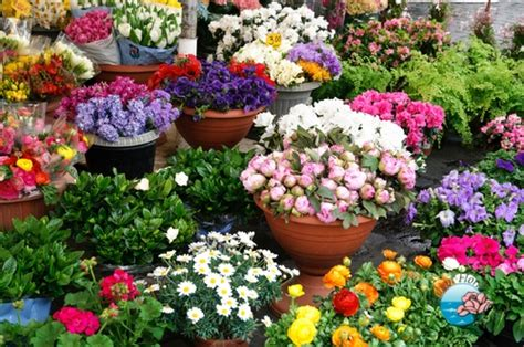 nomi piante e fiori fiori e piante cemambiente