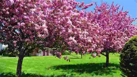 Pupuk Untuk Bunga Seruni 123 gambar bunga dan macam macam jenis indah langka