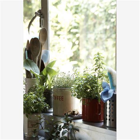 Indoor Herb Gardens by Easy Start To An Indoor Herb Garden