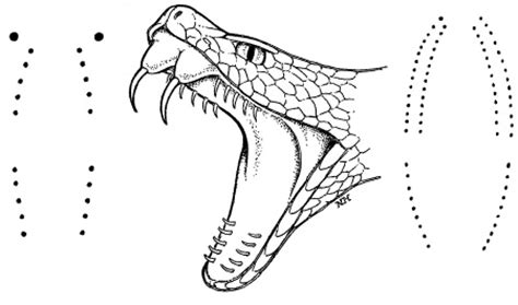 water moccasin coloring page snake and insect bites pediatric diseases conditions