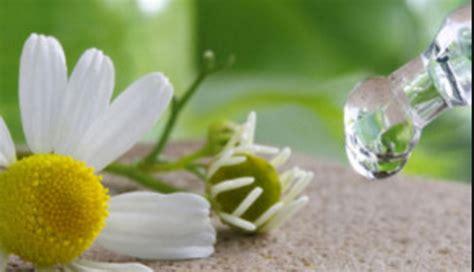 fiori di bach per lutto vediamocichiara cosa sono i fiori di bach vediamocichiara