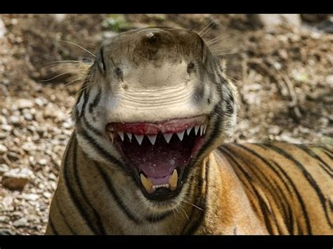 imagenes sorprendentes de animales gigantes top 8 animales hibridos mas increibles del mundo los 8