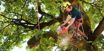 michigan tree best detroit tree service top verified tree care
