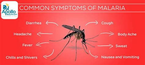 Home Foundation Types by Common Symptoms Of Malaria