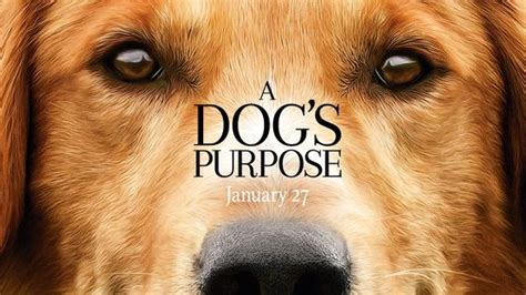 filme schauen a dog s journey the internet to be and theater on pinterest