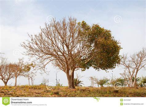 half tree half tree royalty free stock photography image 25412397
