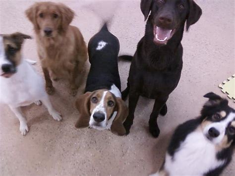 lucky puppy daycare lucky daycare in ta fl yellowbot