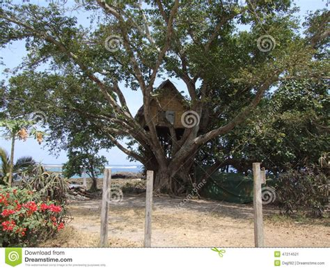 original tree house in vanuatu stock photo image 47214521