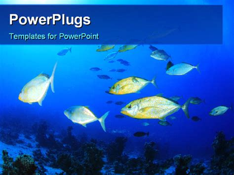 fish powerpoint template powerpoint template colorful fishes swimming in the water