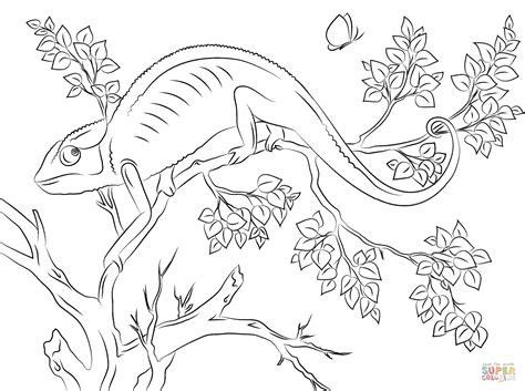 cute chameleon coloring page  printable coloring pages