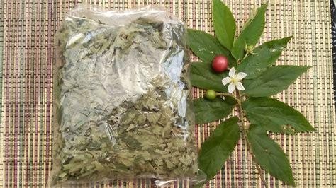 50 Gram Temulawak Kering jual daun kersen kering 50 gram net heroe herbal