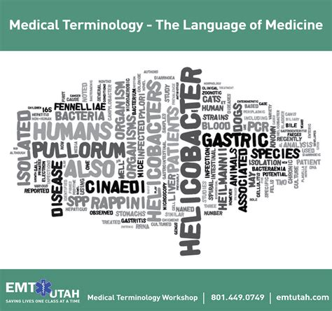 medical terms medical words related keywords medical words long tail