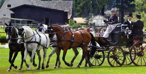 cavalli da carrozza in vendita moirano finimenti per cavalli e carrozze dal 1930