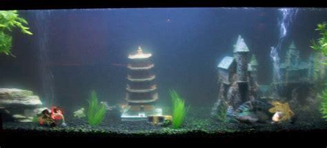 freshwater fish tank maintenance has cloudy water 2017 fish tank maintenance