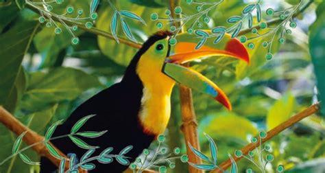 la fauna pictures uniremington protecci 243 n del medioambiente y la fauna silvestre