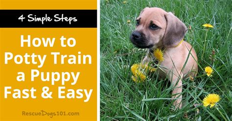 how to potty a shelter how to potty a puppy fast easy rescue dogs 101