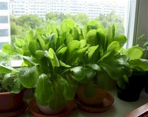 unique indoor herb garden ideas   small home