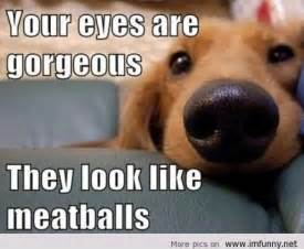 Memes For Kids - cute disney animals memes