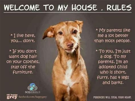 dog house rules house rules i live here you don t if you don t want dog hair on your clothes