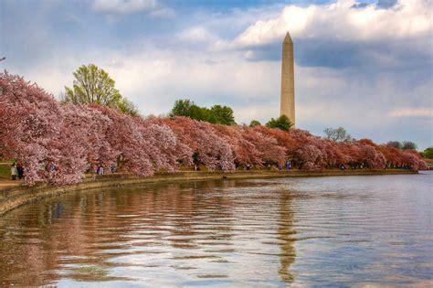 cherry blossom festival dc washington dc cherry blossom festival washington dc