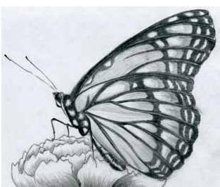 imagenes a lapiz de mariposas dibujos a lapiz de mariposas alojamiento de im 225 genes