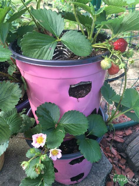 Diy Strawberry Planter by Diy Strawberry Planter From Recycled Materials