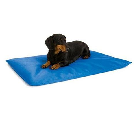 cooling dog bed cool bed iii dog water bed dog products gregrobert