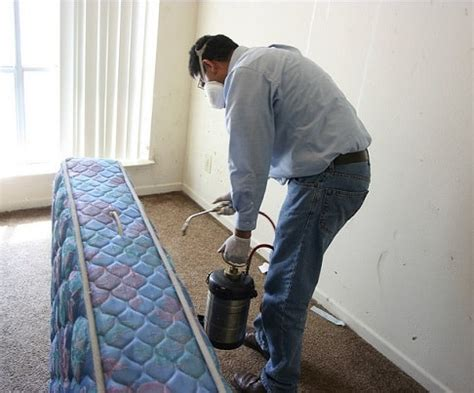 bed bug terminator top 10 tips for choosing the best pest control service