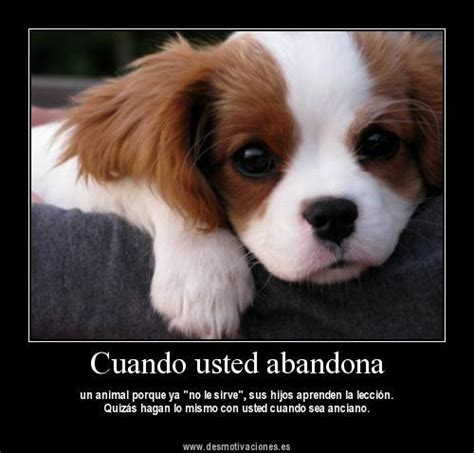 imagenes tristes de amor con animales im 225 genes animales tristes im 225 genes y frases tristes