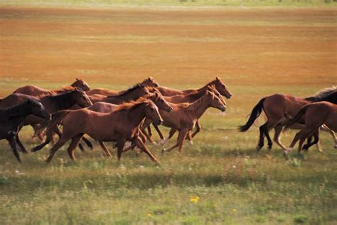 pictures of mustang horses california animal welfare groups file lawsuit to prevent