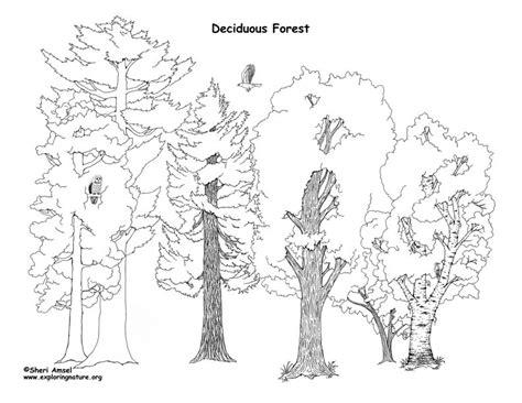 printable forest diorama deciduous forest diorama