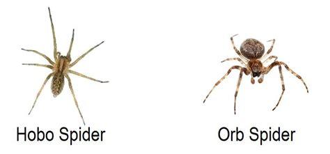 Garden Spider Pacific Northwest Eradipest Pest