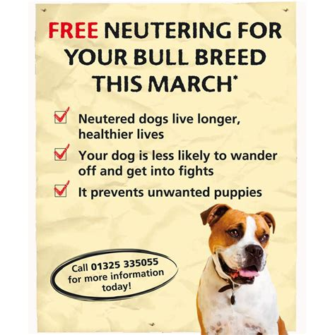 where to get spayed for free free neutering for your bull breed gratisfaction uk