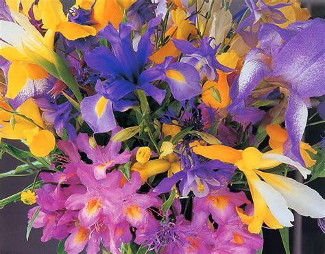 fiori di pensiero fiori colorati per voi fiori di pensiero poesie