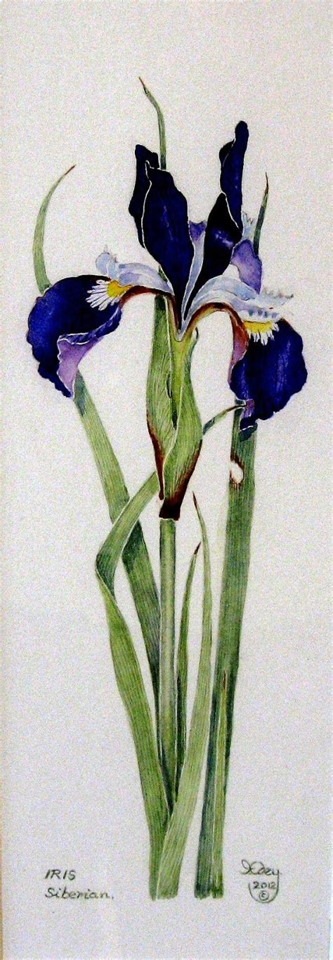 watercolor tattoo artist uk siberian iris watercolor siberian iris iris edey iris