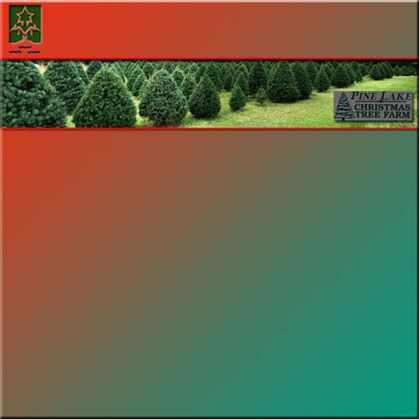 home www pinelakechristmastrees com