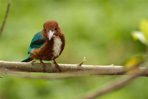 kingfisher backyard birds the bird food store