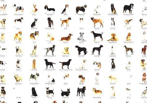 list  dog breeds  kind  dog