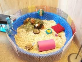 Guniea Pig Hutch Kiddie Pool Guinea Pig Cage Petdiys Com