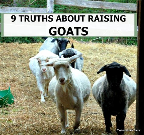 raising dairy goats a beginners starters guide to raising dairy goats books 28 best raising goats raising goats for prep shtf