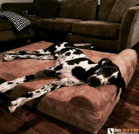 great dane dog bed dog beds great danes and beds on pinterest