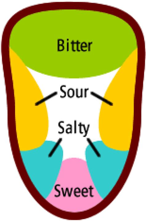 taste sections of the tongue the tongue map myth how it originated and grew