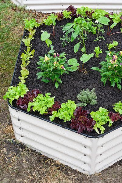 How To Build A Easy Vegetable Garden Easy Vegetable Garden