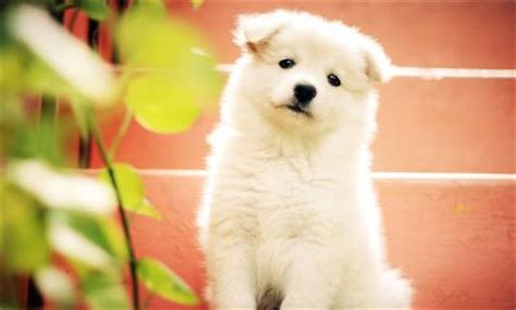 white puppy names white names 65 awesome ideas for white furbabies