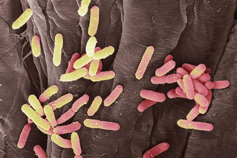 what can you give a for urinary tract infection uti bacteria use hooks to hang on inside you when you new scientist