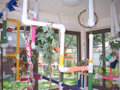 bird room related keywords suggestions for indoor bird room